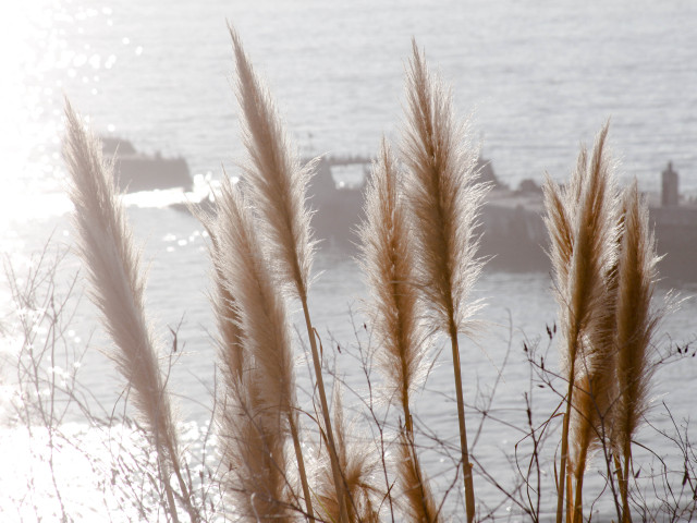 Cement Ship and pampas grass