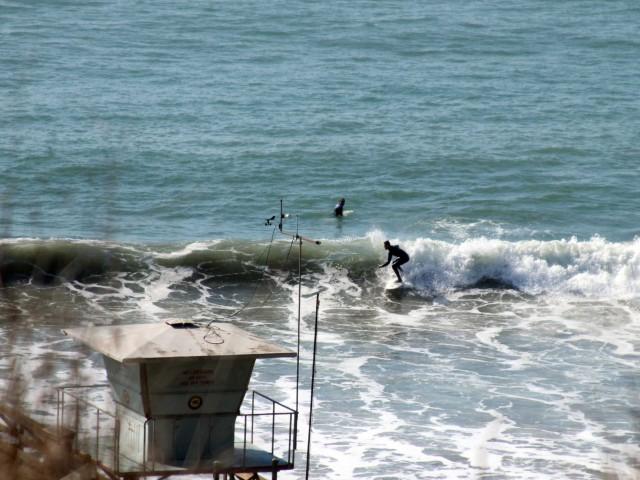 Seacliff Surfer
