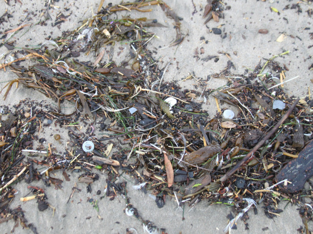 Plastic on Beach After Big Surf
